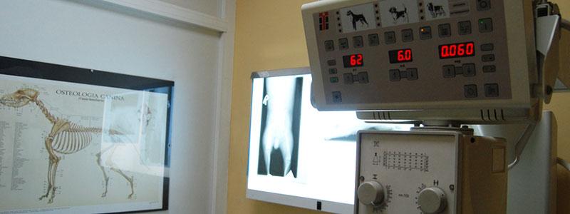 Clinica veterinaria Lupo en Barcelona especialistas en medicina veterinaria