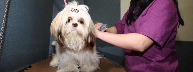 Clinica veterinaria en Granollers, Barcelona